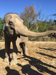 good vibe elephant
