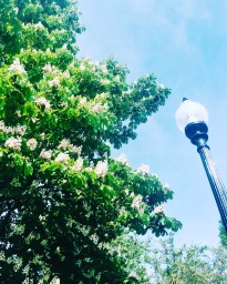 Boston MA - Spring 2016